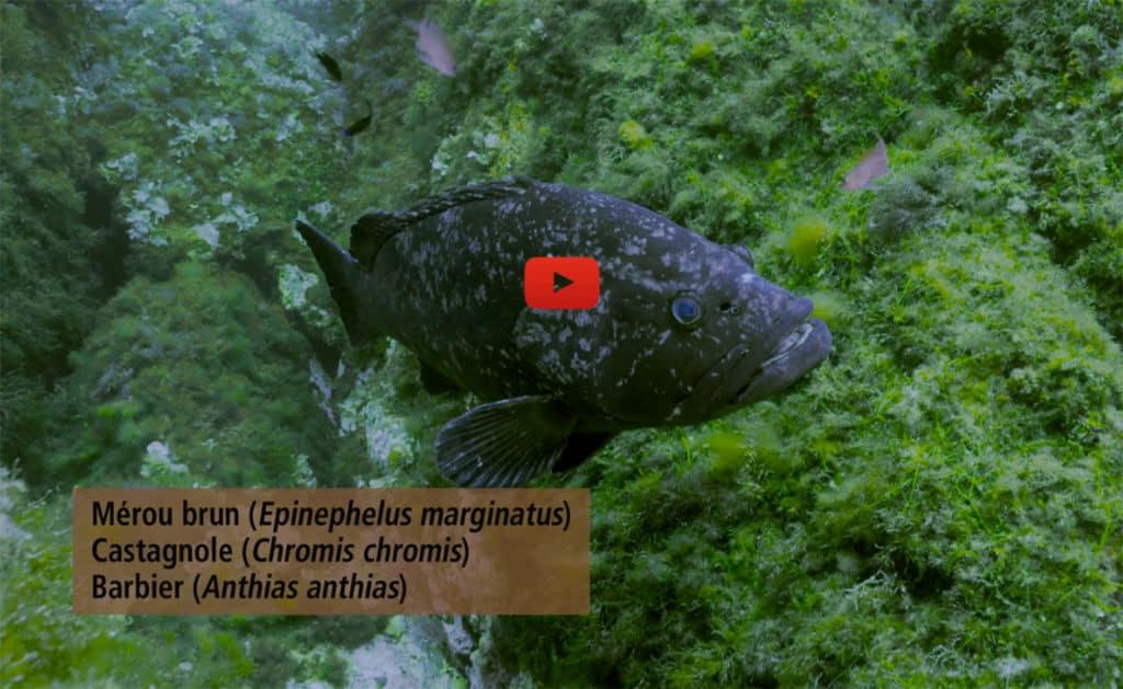 Illustration-film-comptage-poissons-PNPC
