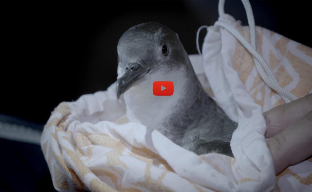 Illustration-film-puffin-PNPC